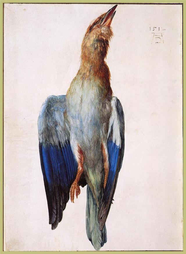 Dead Bluebird, 1512, watercolor, Albertina Vienna, Austria