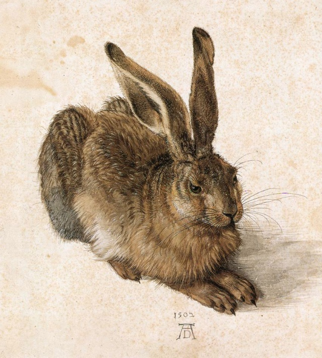 Young Hare, 1502, Gouache and watercolor, 251 x 226mm, Albertina Vienna, Austria
